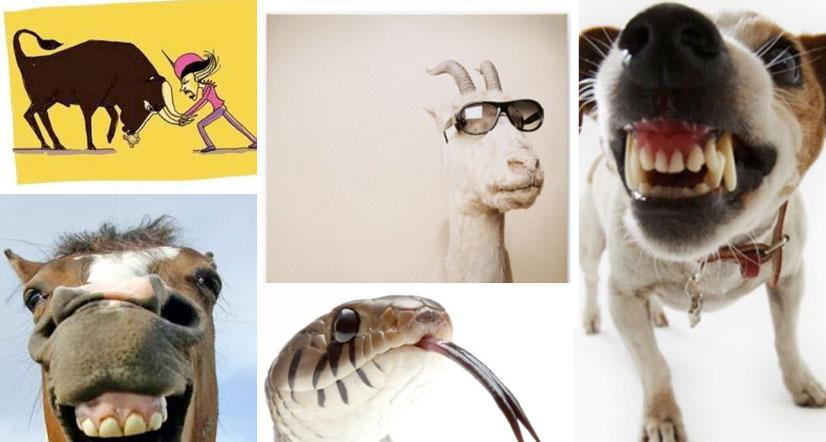 Spanish Expressions. 5 animal idioms in Spanish